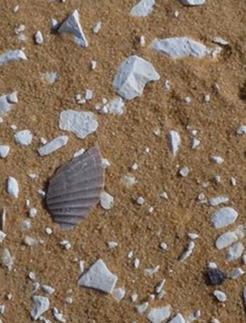conchas-de-mar-en-las-arenas-del-sahara